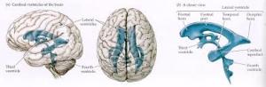 ADHD, nieuwe inzichten en behandeling met osteopathie